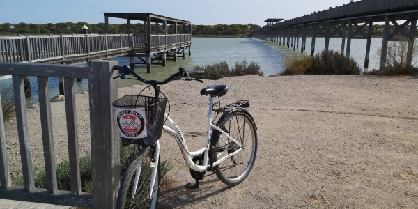 Visita al Parque de Los Toruños en bicicleta